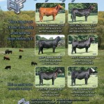 Hudson_Pines_Farm_July_Aug_2012_Register_ad.indd