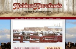 Holden Herefords