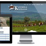 June 2016 Design of the Month - Kanimbla Poll Herefords